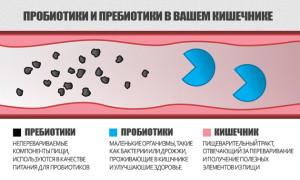 o-polze-probiotikov-i-prebiotikov-2